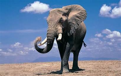 Elefantes Wallpapers Gratis Fondos Pantalla