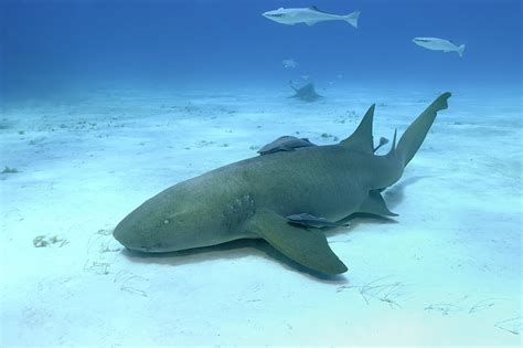 Everything You Need To Know About Shark Diving