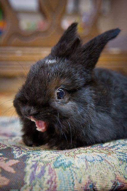 black rabbit  mouth open luvbat