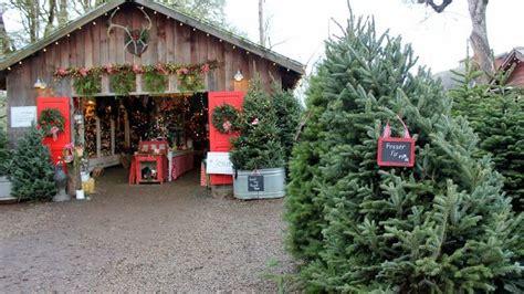 best christmas tree farms oregon best tree farm in oregon state shop farming tree farm and
