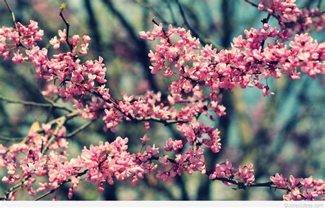 awesome  spring photo