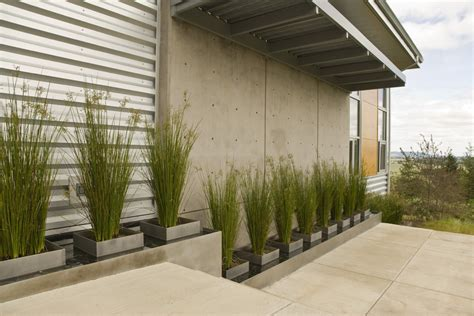 plants for modern landscaping modern landscaping plants www pixshark com images galleries with a bite