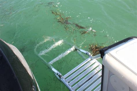 Fishing Boat Rentals Marathon Florida by Boat Rentals In Marathon Florida Keys Marathon Fl