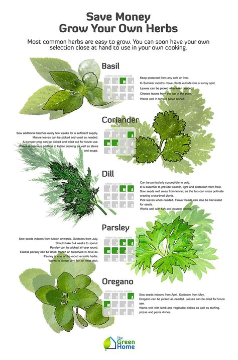 how to herbs save money grow your own herbs the green home