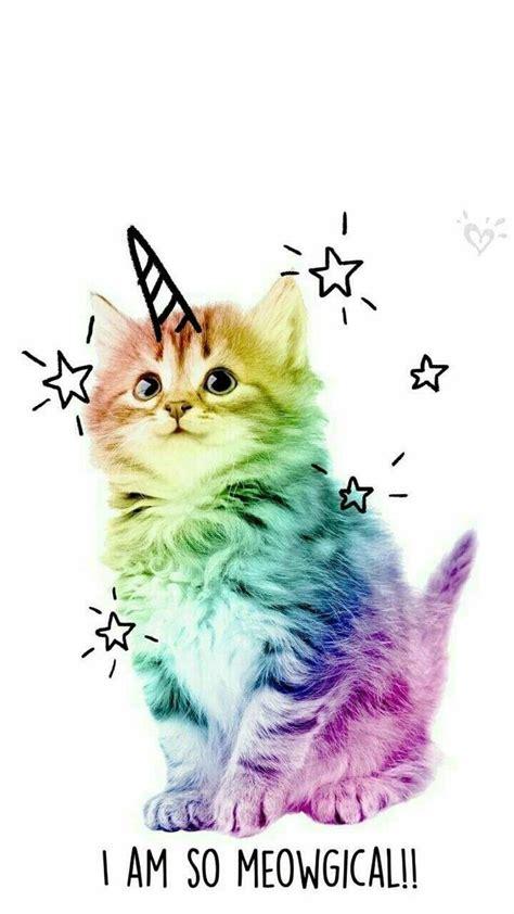 unicorns image  madison chaplin cat phone wallpaper