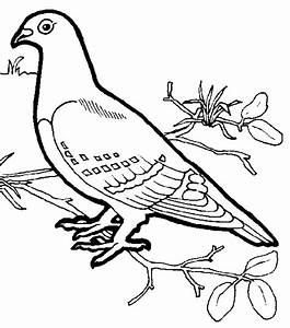 Tropical Bird Coloring Sheets Coloring Pages