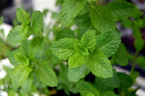plante pour chambre 5 plantes pour purifier votre chambre