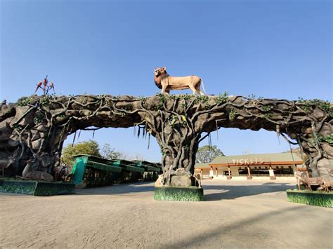park safari jungle unity statue open gujarat near later month attractions narmada zoological central