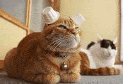 cats 2015 GIFs Search | Find, Make & Share Gfycat GIFs