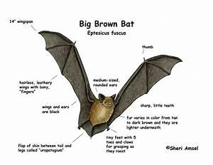 Label Bat Diagram