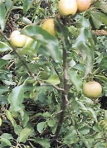 Wann Himbeeren Pflanzen : bild seite familienheim und garten ~ Lizthompson.info Haus und Dekorationen