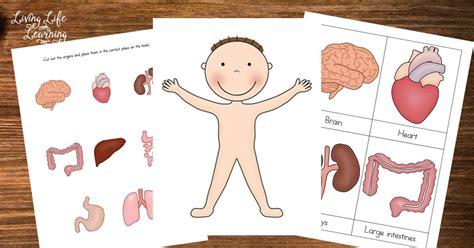 preschool human printables home schoolhouse rock 668   317dc095981c582c1916443fb99f17c2
