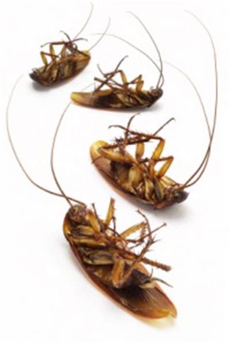 natural bug  pest repellents   grid news