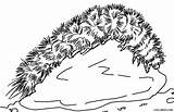 Caterpillar Coloring Pages Bear Wooly Insect Printable Cool2bkids Preschool Drawing Drawings sketch template