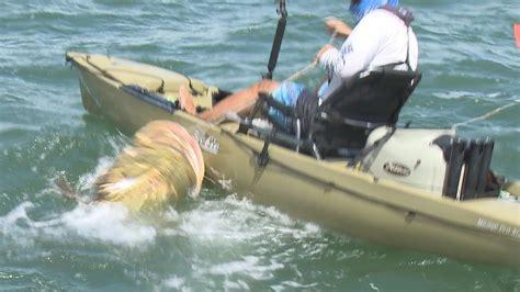 kayak fishing fish ever florida largest saltwater sanibel grouper fake inshore kayaker shark kayaking chew landed goliath fort kayaks hand