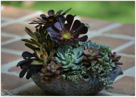 Learn How To Design This 'floral-style' Succulent Container Arrangement By Www.thesucculentperch