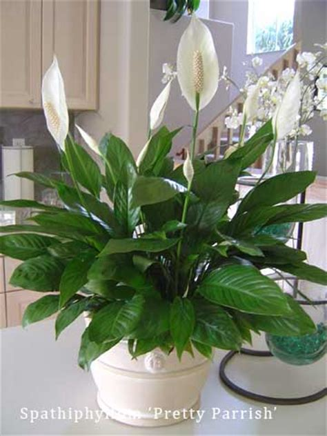 pretty house plants pretty house plants 28 images beautiful air