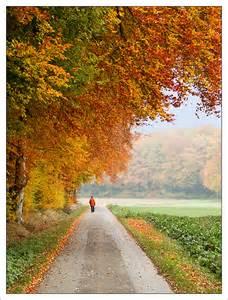Autumn Morning Walk