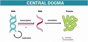 The Central Dogma And The Genetic Code In Molecular Biology