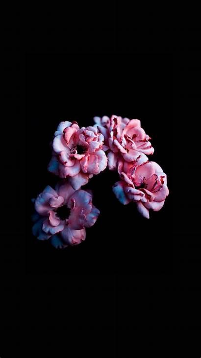 Iphone Flower Petal Bloom Wallpapers