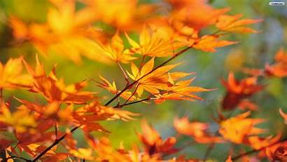 Fall Autumn 1600 900 Leaves Wallpapers Code
