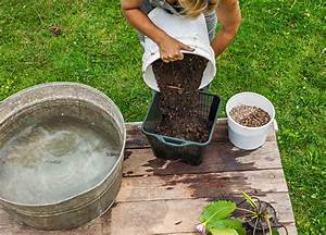 Terre Végétale En Sac : petit bassin aquatique en r cipient faire soi m me 13 ~ Dailycaller-alerts.com Idées de Décoration