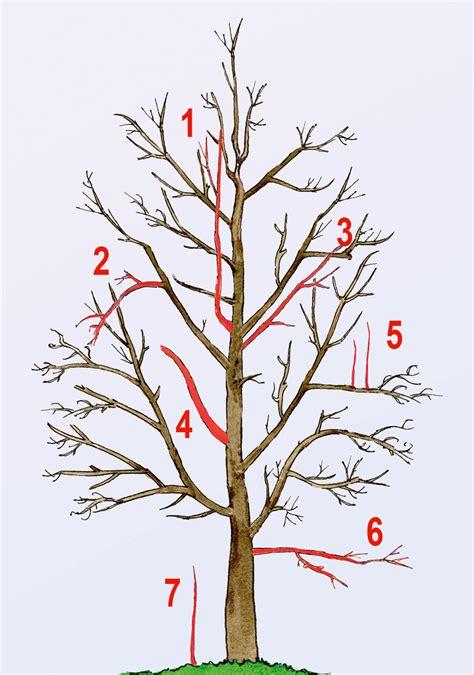 alte kirschbäume schneiden alten birnbaum schneiden