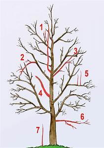 Apfelbaum Schneiden Wann : obstbaumschnitt ~ Watch28wear.com Haus und Dekorationen