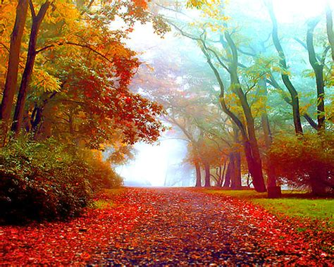 amazing autumn trees wallpapers fantastic viewpoint