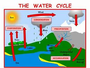 Water Cycle Diagram With Accumulation