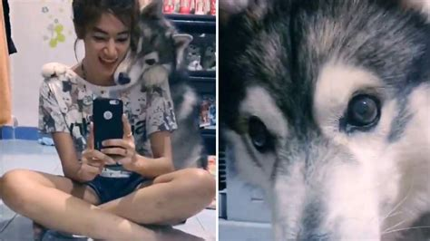 Photogenic Dog Is Desperate To Get In On Owners Selfie In
