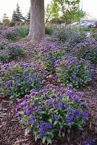 full shade shrubs Best 25+ Full shade plants ideas on Pinterest | Full shade ...