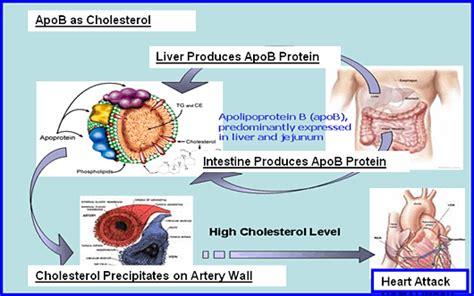 Hypercholesterolemia. Causes, symptoms, treatment