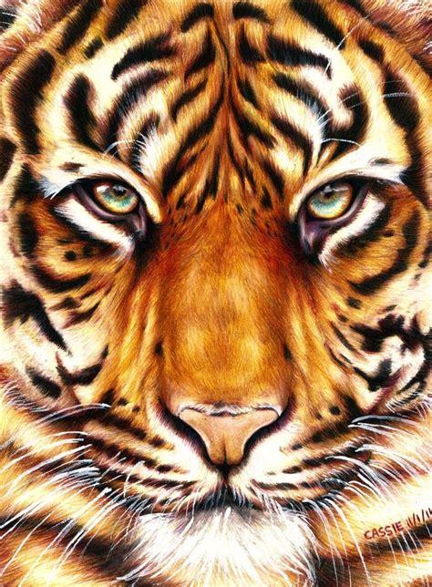 tiger amazing animal drawings  great pencils visit