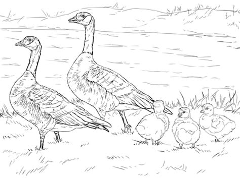 cackling goose family coloring page  printable