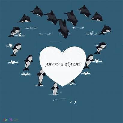 Birthday Happy Wishes Dolphins Animated