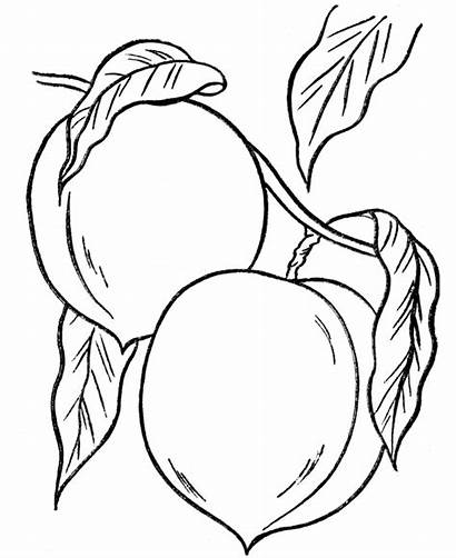 Coloring Tree Peaches Thanksgiving Dinner Pages Fruit
