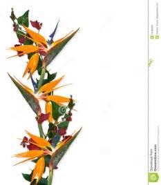 Tropical Birds and Flowers Border Clip Art