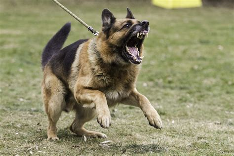 dog trainer managing  key types  dog aggression