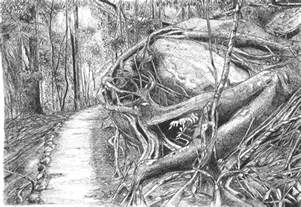 Rainforest Drawing