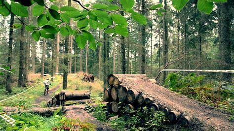 beautiful pictures  rold skov denmark weneedfun