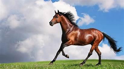 Horse Wallpapers Run Move Horses Running Amazing