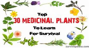 medicinal herbs and their uses