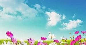 Blumen Im Frühling : fr hling hintergrund bilder mit blumen hd hintergrundbilder ~ Orissabook.com Haus und Dekorationen