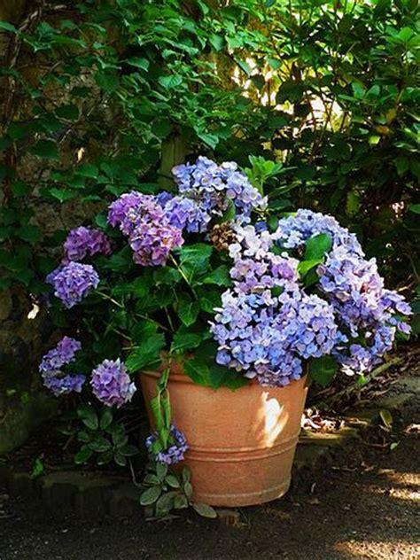 care of hydrangeas in pots hydrangea plants diy single plant selection flower arrangement home decoration silk flowers