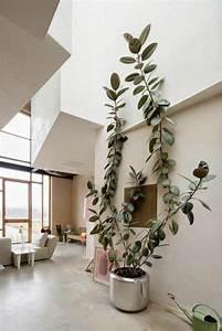 Pflegeleichte Zimmerpflanzen Mit Blüten : zimmerpflanzen bilder gem tliche deko ideen mit topfpflanzen home living pflanzen ~ Eleganceandgraceweddings.com Haus und Dekorationen