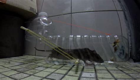 Trappola per topi fai da te la guida illustrata Tecnologia e Ambiente