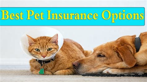 Is pet insurance worth it? the 6 best pet insurance options of 2020 - YouTube