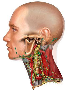 neck dissection oscc