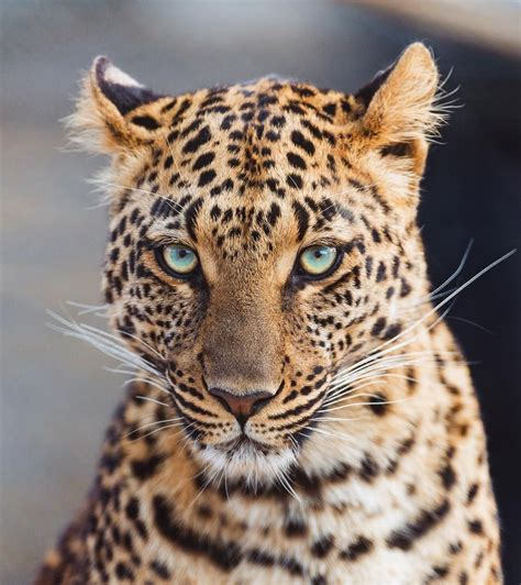 Likes Comments Wildlife Planet